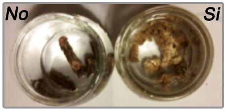 Test pellet water